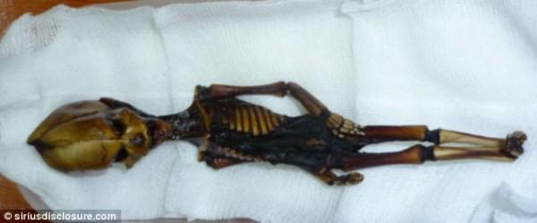 Cientistas confirmam origem de estranho e minúsculo esqueleto_2