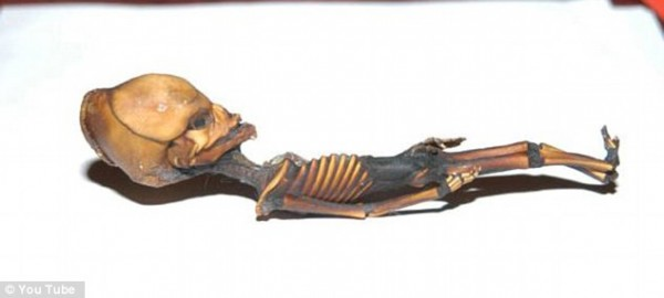 Cientistas confirmam origem de estranho e minúsculo esqueleto_4