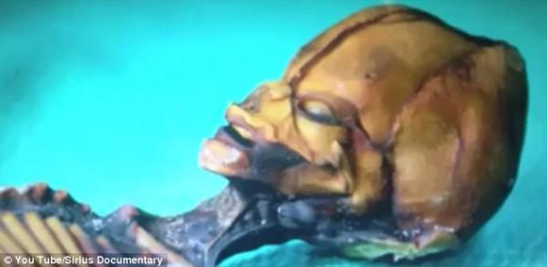 Cientistas confirmam origem de estranho e minúsculo esqueleto_7