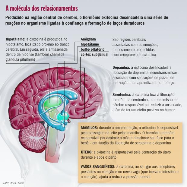 oxitocina-cerebro-moral-20120625-original