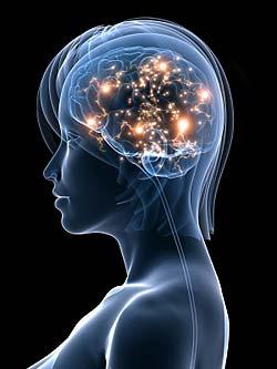evolucao-do-cerebro-1