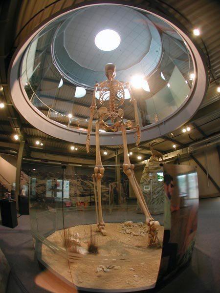 Na Provincia de Loja, Sul do Equador e fronteira com o Perú, há muito tempo se ouve lembranças que narram estranhos ossos muito similares aos de humanos mas de incrível tamanho, que teriam sido encontrados por vários personagens nos belos vales dessa Província. Veja mais em: http://wp.me/peNta-UY.