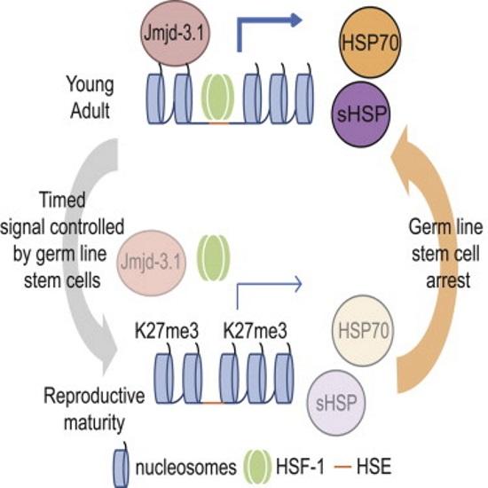 Cientistas chegam mais perto da imortalidade ao desligar o processo de envelhecimento em vermes 2