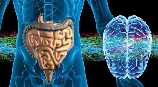 segundo-cerebro